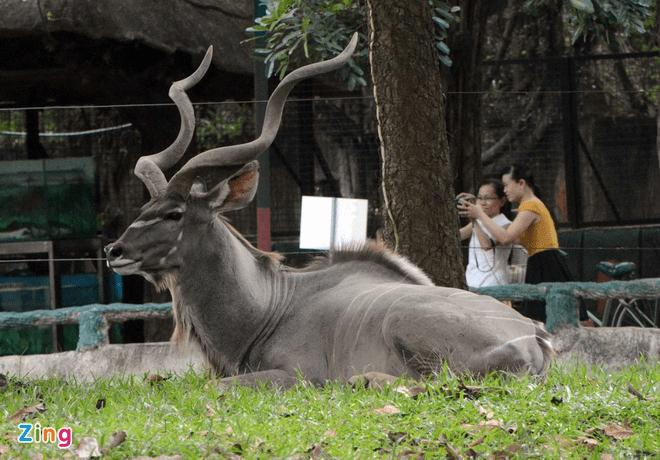 Cùng dạo chơi vườn thú để đến gần hơn với thế giới động vật