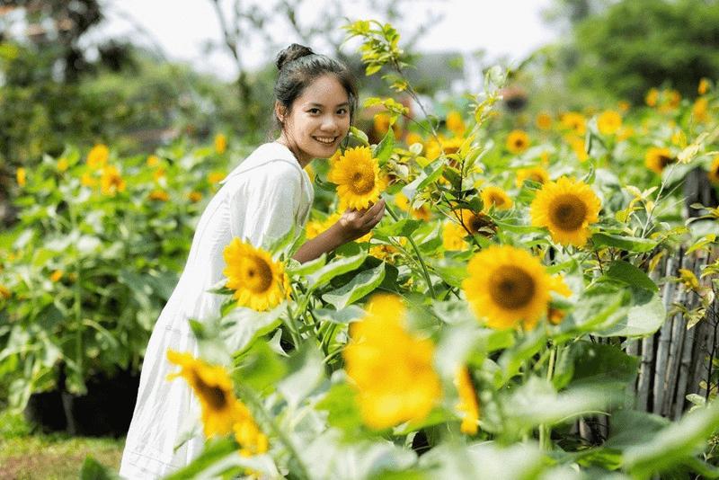 Pose dáng xinh lung linh bên cánh đồng hoa hướng dương