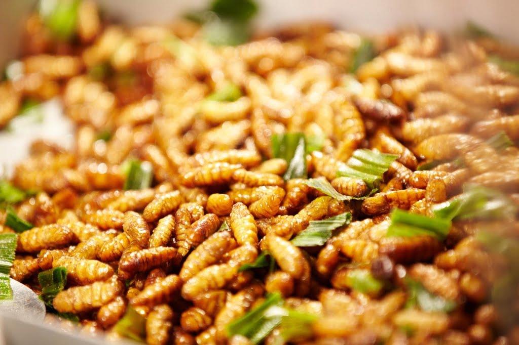 Gỏi nhộng ong - Món ăn ngon tại Cà Mau