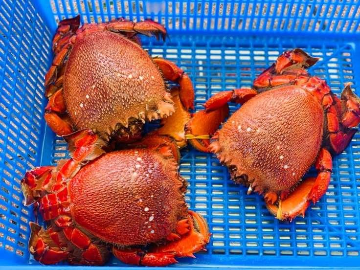 Cua Huỳnh Đế - Món ăn ngon tại Bình Định