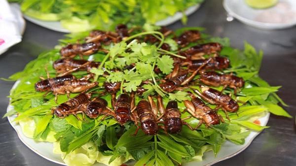 Dế mèn chiên - 10 món ăn ngon Yên Bái